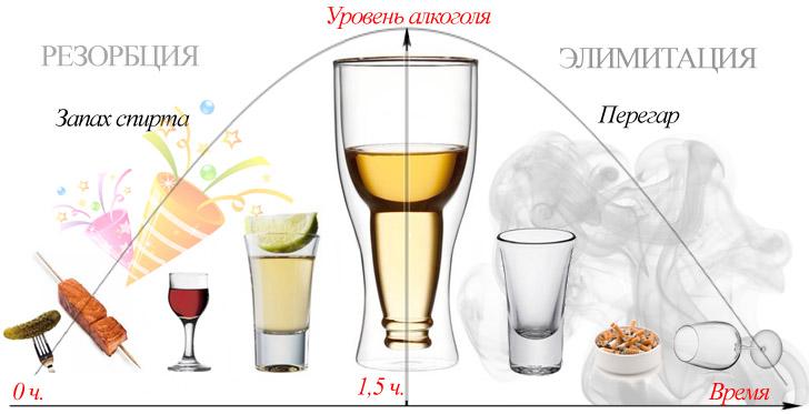 Изменение уровня алкоголя в крови во времени