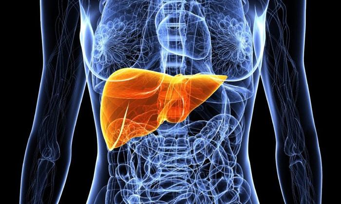 Бензол попадает в печень по системе воротниковой вены, дальге печень запускает процесс конъюгирования его с глюкуроновой кислотой