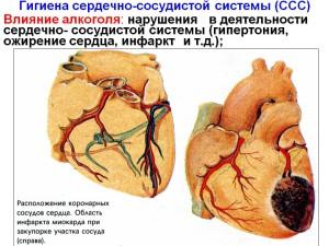 Воздействие алкоголя и курения на сердце