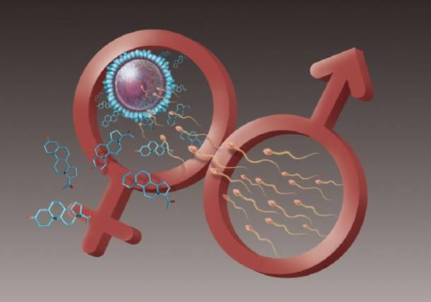 vliyanie-oksaloatsetata-na-spermatozoidi