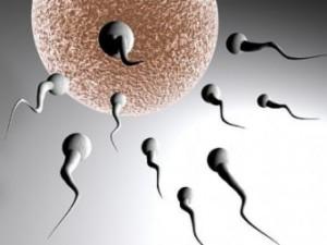 Как алкоголь влияет на яйцеклетки женщины?