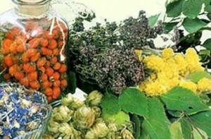 травы, корни и плоды