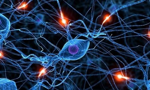 Компоненты Актоплекса оказывают воздействие на процессы обмена информацией между нервными клетками, что ослабляет тягу к спиртным напиткам