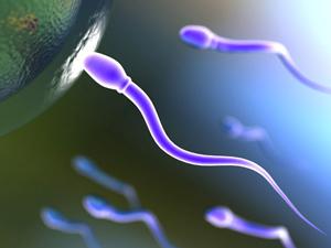 Отрицательное влияние алкоголя на сперматозоиды