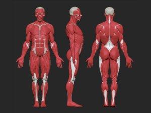 Отсутсвие роста мышц при употреблении алкоголя
