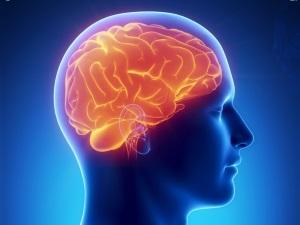 Вред алкоголя для мозга