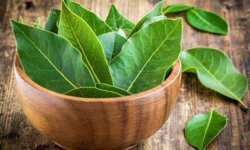 Для выведения из запоя и лечения алкогольной зависимости можно использовать листья лавра
