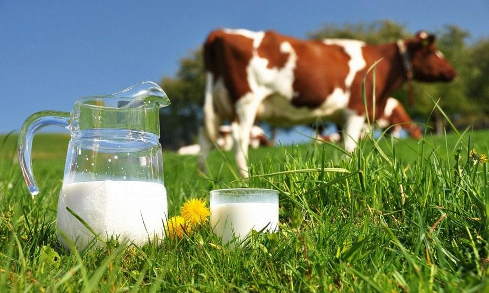 Молоко при алкогольном отравлении можно пить в ограниченном количестве