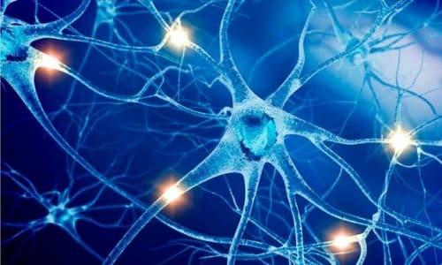 ГАМК транспортируется в центральную нервную систему и оказывает непосредственное воздействие на нее