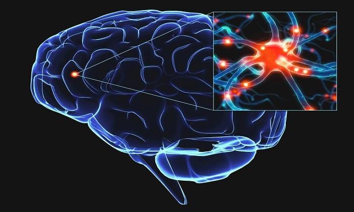 Препарат защищает клетки мозга