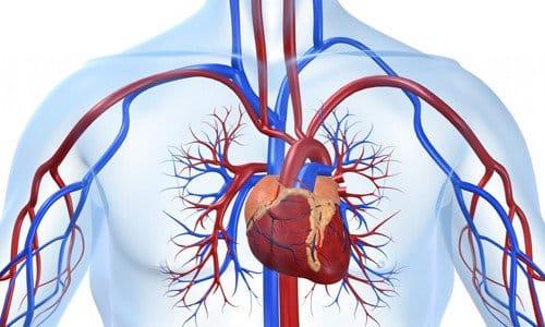 Средство не назначают при заболеваниях сердечно-сосудистой систем