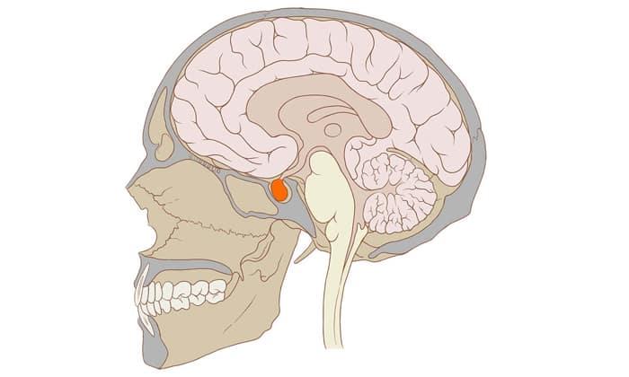 Нарушение работы мозжечка - причина для употребления Гидазепама