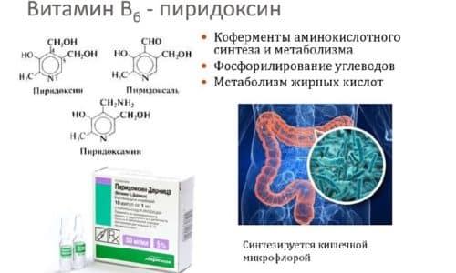 В6 синтезируется растениями и кишечной микрофлорой из промежуточных продуктов гликолиза (3-фосфоглицерина, диоксиацетонфосфата, пировиноградной кислоты)