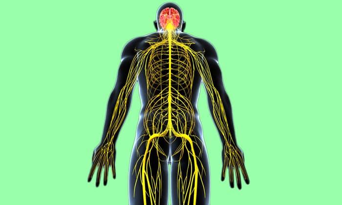 При перевозбуждении нервов препарат делает рецептор более стабильным, и в результате динамика нервных процессов приходит в норму