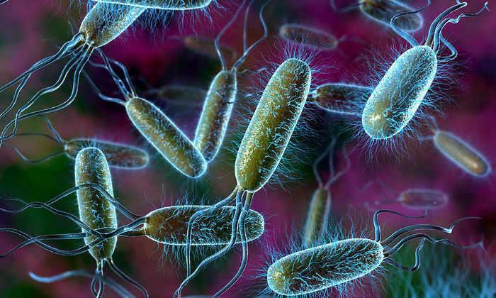 Суппозитории показаны к применению при инфекционных кишечных заболеваниях