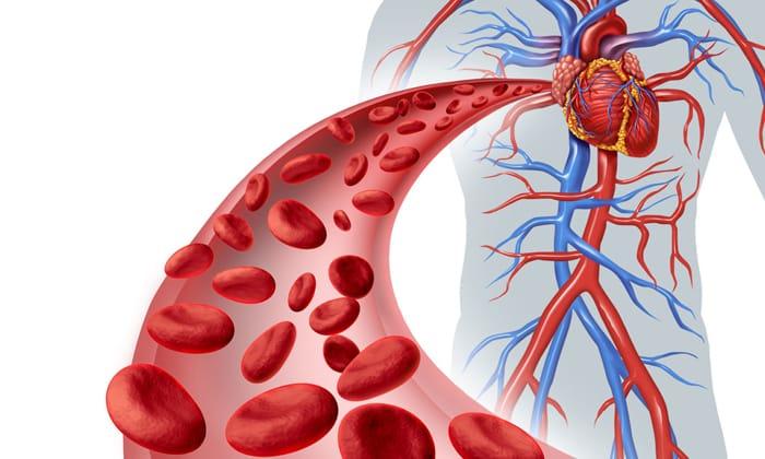 Витамин участвует в процессе образования крови