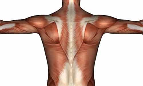 Исследования подтверждают, что ГАМК способствует более быстрому набору мышечной массы благодаря повышению выработки гормона роста